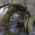 Stromy u Zákolanského potoka