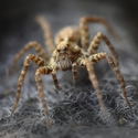Pavouček...
