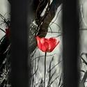 Plot kvetoucí 4
