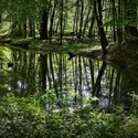 Z Polaneckého lesa,