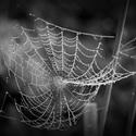 Pavučina křehkých  snů ranní rosou utkaná od mistra stavitele pana pavoučka