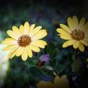 Krásky ze zahrady...III.