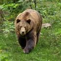 obrázky z Bavorského lesa (10)