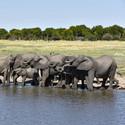 Sloní občerstvení