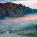 Jetřichovice pod mlhou