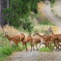 letošní léto v přírodě (11)