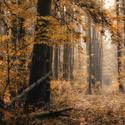 Jiný les