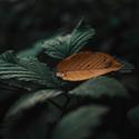 Podzim přichází do lesa