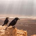 Výhled z pevnosti Masada #2