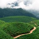 Sri Lanka, cajove plantaze