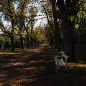 Podzim na dobříšském zámku