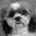 """""""Jakkoli málo peněz a jakkoli málo majetku máte, když máte psa, jste bohatí."""" - Louis Sabin"""