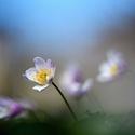 ...kvetou...