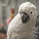 Papoušek - Botanická zahrada UK