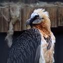 Z Ostravské zoo - dívám se!