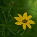 Žlutý kvítek v zeleném náručí