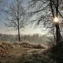 Cestou z lesa