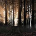 Lesní energie