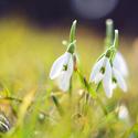 Jaro přichází