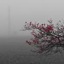 Červený strom