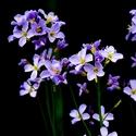 Posel jara