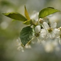 V ovocných sadech
