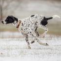 První sníh a Evropský saňový pes...