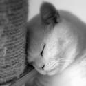 Unavený kocourek