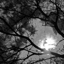Noční stromy