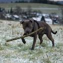 Pes kouzelník