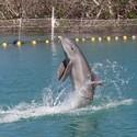 Delfíní dovádění