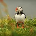 obrázky z islandské přírody (41)