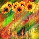 V zajetí slunečnic