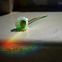 Sedmikráska - hra světla.