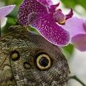 Schovaný v orchideích