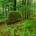 Jarní Jizerky na zeleném koberci...