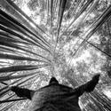 Bambusárna