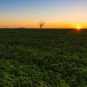 Slunce, strom a Pálava