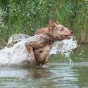 Vodní vlkodlak