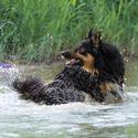 Borderka milující vodu