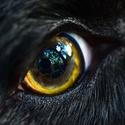 Andyho oko