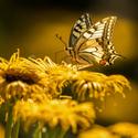 Otakárkovo zlaté letní odpoledne
