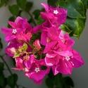 Květy léta