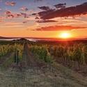 Krása moravských vinic pod Pálavou