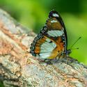 Čas motýľov......
