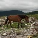 ...pásla koně na betoně