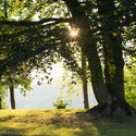 Slunce mezi větvemi stromu