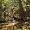 Lužní les XXXVII - Přírodní rezervace Rezavka