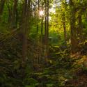 jedna z lesa :)