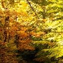Brouzdání listím